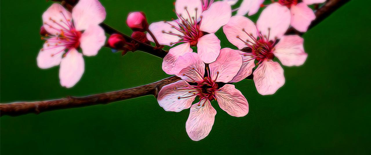春天的呼唤_图1-8