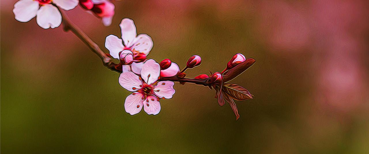 春天的呼唤_图1-7