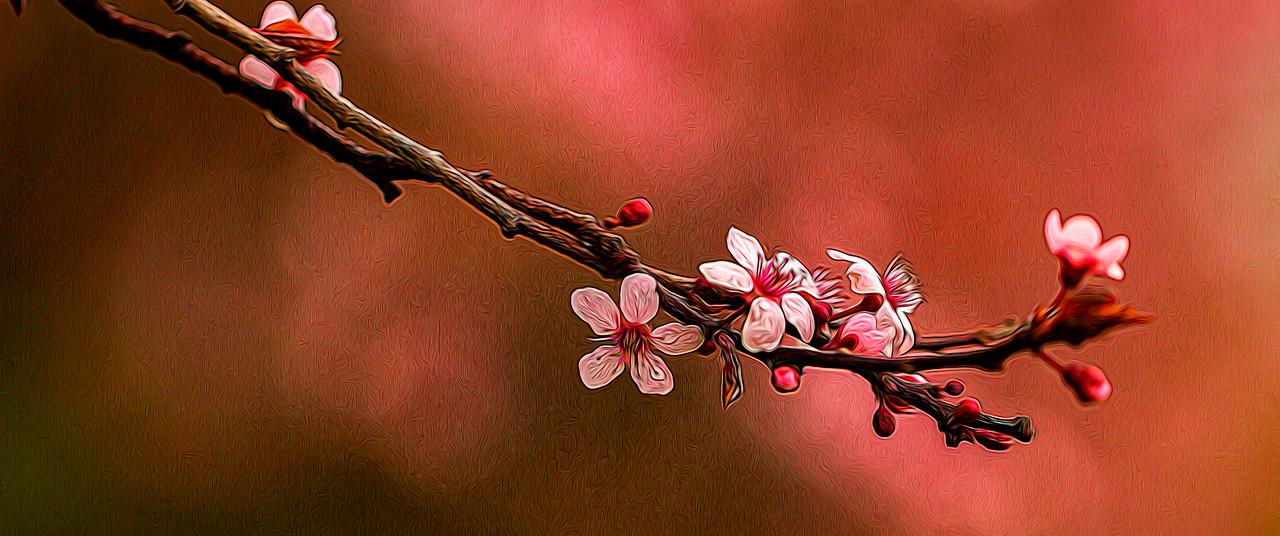 春天的呼唤_图1-5