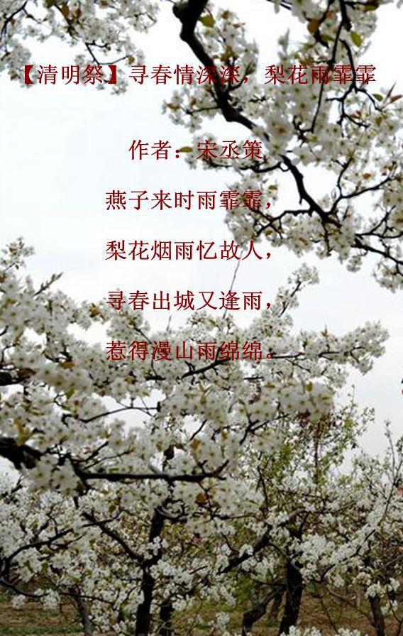 【清明祭】寻春情深深 梨花雨霏霏_图1-1
