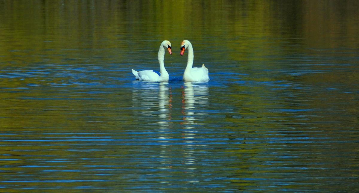 【老谢凭栏】爱在蓝天绿水间_图1-6