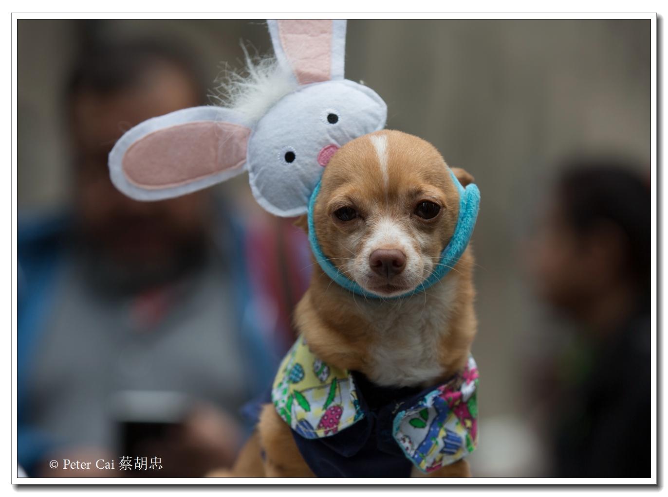 """纽约复活节游行,上演""""最新奇别致的帽子""""_图1-5"""
