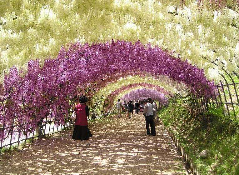 紫藤2_图1-12