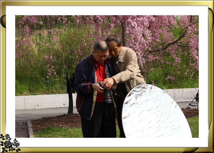 布鲁克林植物园赏樱花絮(2017-4-14)_图1-13