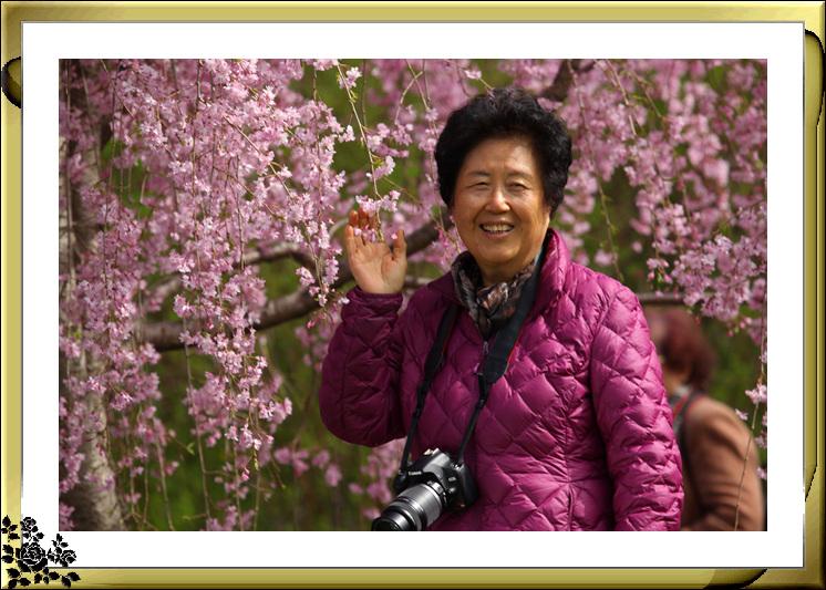 布鲁克林植物园赏樱花絮(2017-4-14)_图1-15