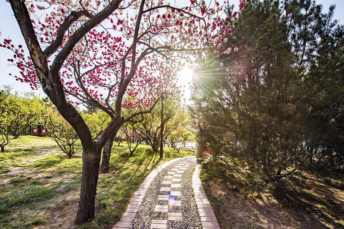 春光明媚_图1-6