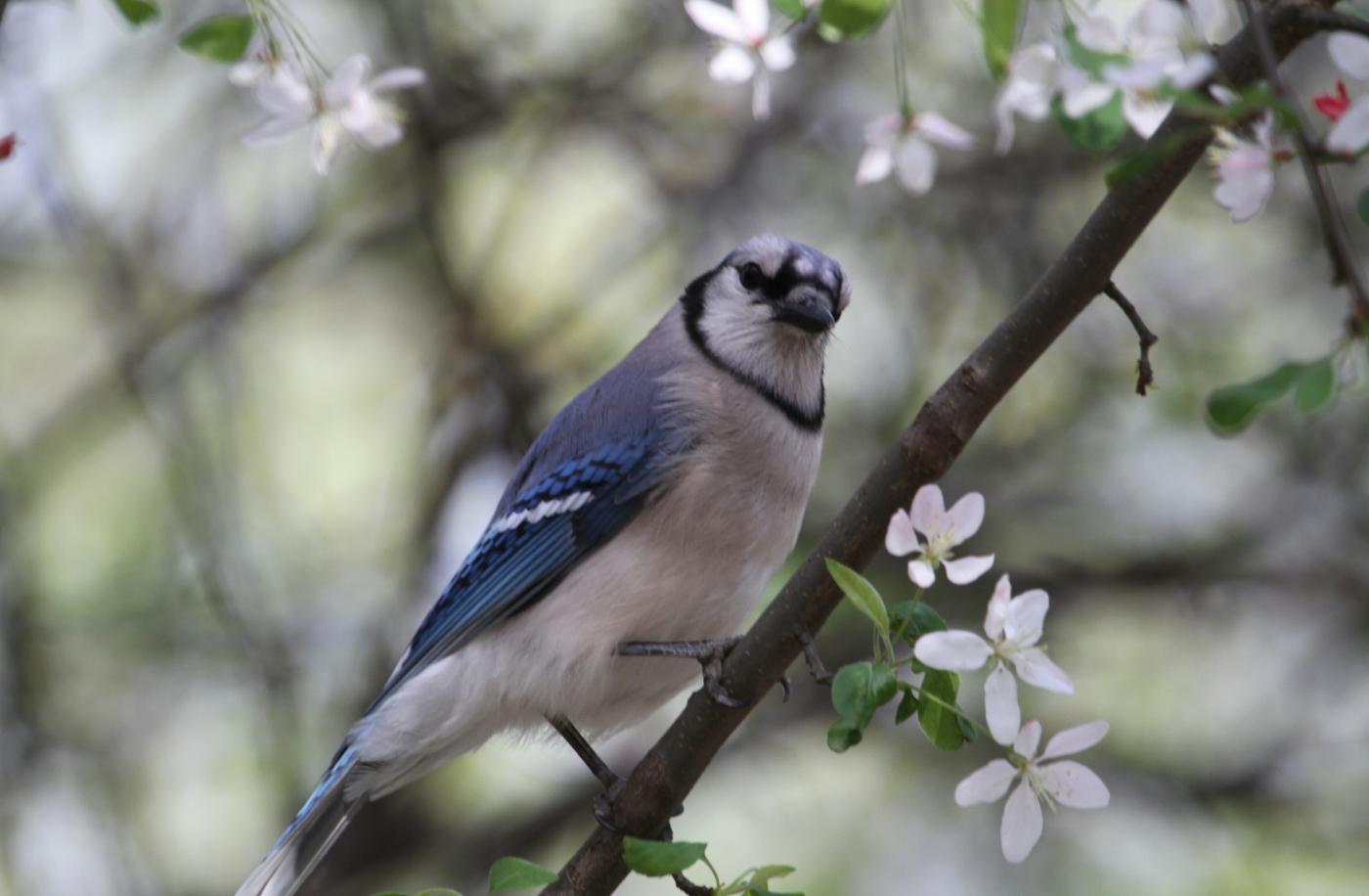 【田螺摄影】春天的随拍_图1-26
