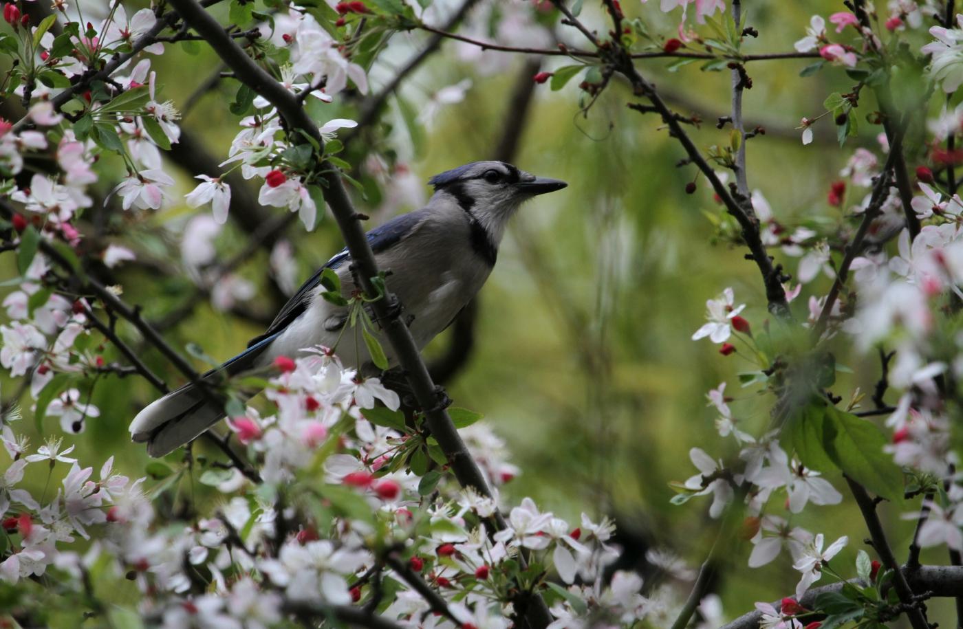 【田螺摄影】春天的随拍_图1-27