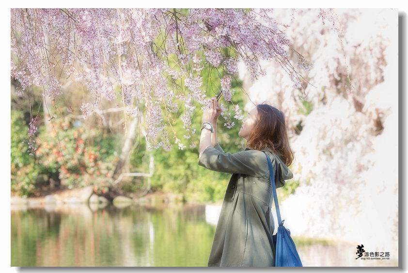〖梦游摄影〗樱花_图1-15