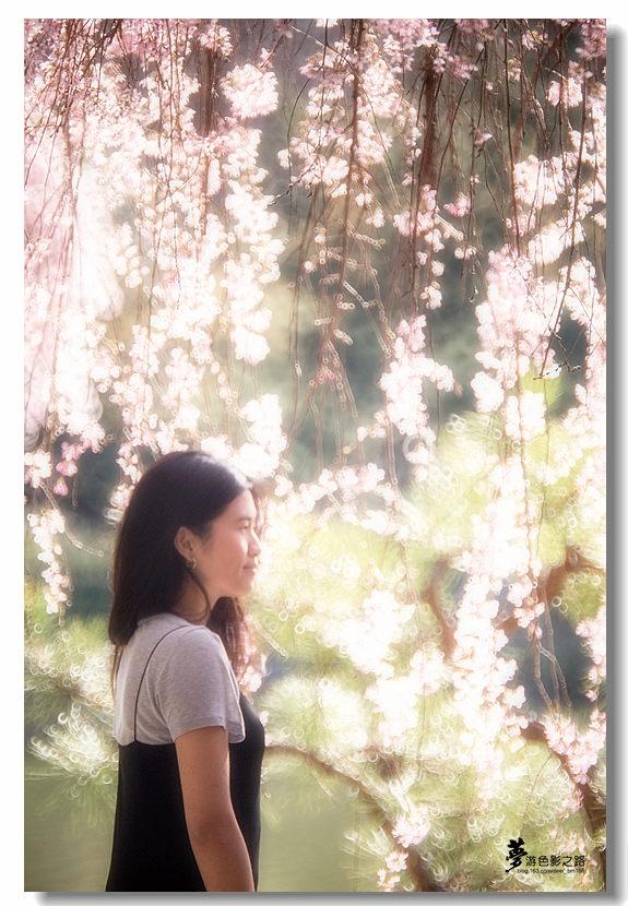 〖梦游摄影〗樱花_图1-16