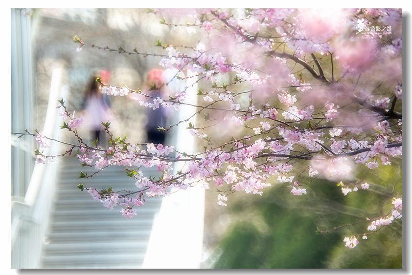 〖梦游摄影〗樱花_图1-27