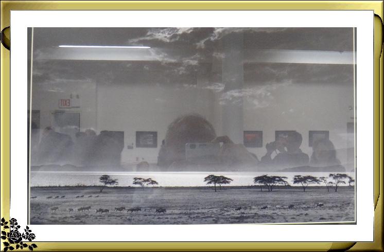 """""""非洲之行—非洲野生动物摄影展""""21日在长岛市热带雨林展厅开幕 ..._图1-3"""