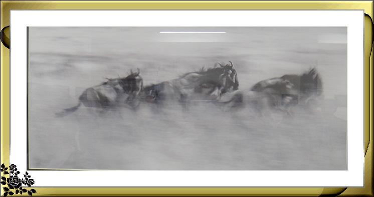 """""""非洲之行—非洲野生动物摄影展""""21日在长岛市热带雨林展厅开幕 ..._图1-1"""