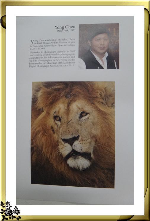 """""""非洲之行—非洲野生动物摄影展""""21日在长岛市热带雨林展厅开幕 ..._图1-2"""