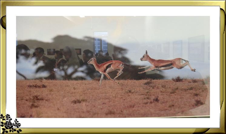 """""""非洲之行—非洲野生动物摄影展""""21日在长岛市热带雨林展厅开幕 ..._图1-5"""