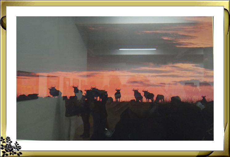"""""""非洲之行—非洲野生动物摄影展""""21日在长岛市热带雨林展厅开幕 ..._图1-4"""