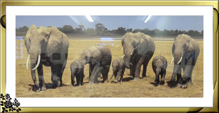 """""""非洲之行—非洲野生动物摄影展""""21日在长岛市热带雨林展厅开幕 ..._图1-6"""