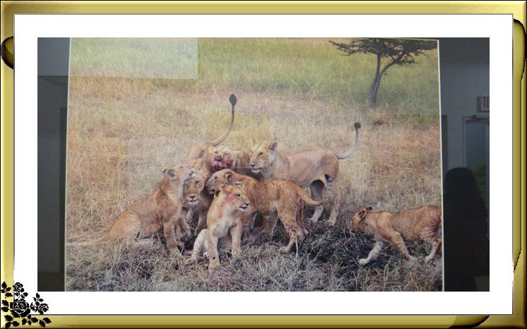 """""""非洲之行—非洲野生动物摄影展""""21日在长岛市热带雨林展厅开幕 ..._图1-10"""