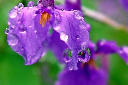 【】原创】春雨淅淅沥沥_图1-2