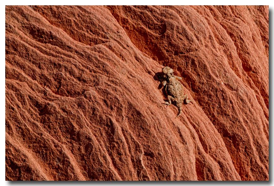 《酒一船摄影》:火浪逶迤火焰谷_图1-8