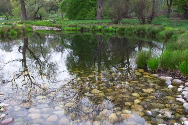 雨后之Brookylin 植物园_图1-2