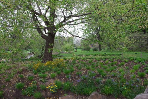 雨后之Brookylin 植物园_图1-4