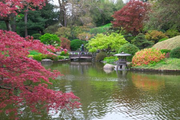 雨后之Brookylin 植物园