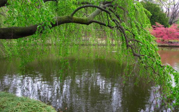 雨后之Brookylin 植物园_图1-7