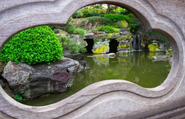 雨后之Brookylin 植物园_图1-6