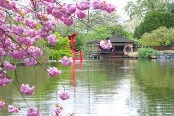 雨后之Brookylin 植物园_图1-10