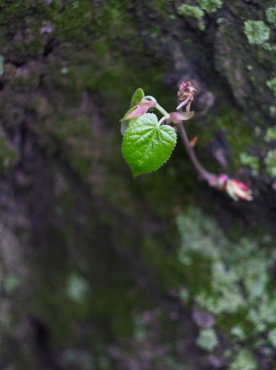 雨后之Brookylin 植物园_图1-12