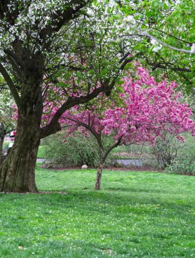 雨后之Brookylin 植物园_图1-15
