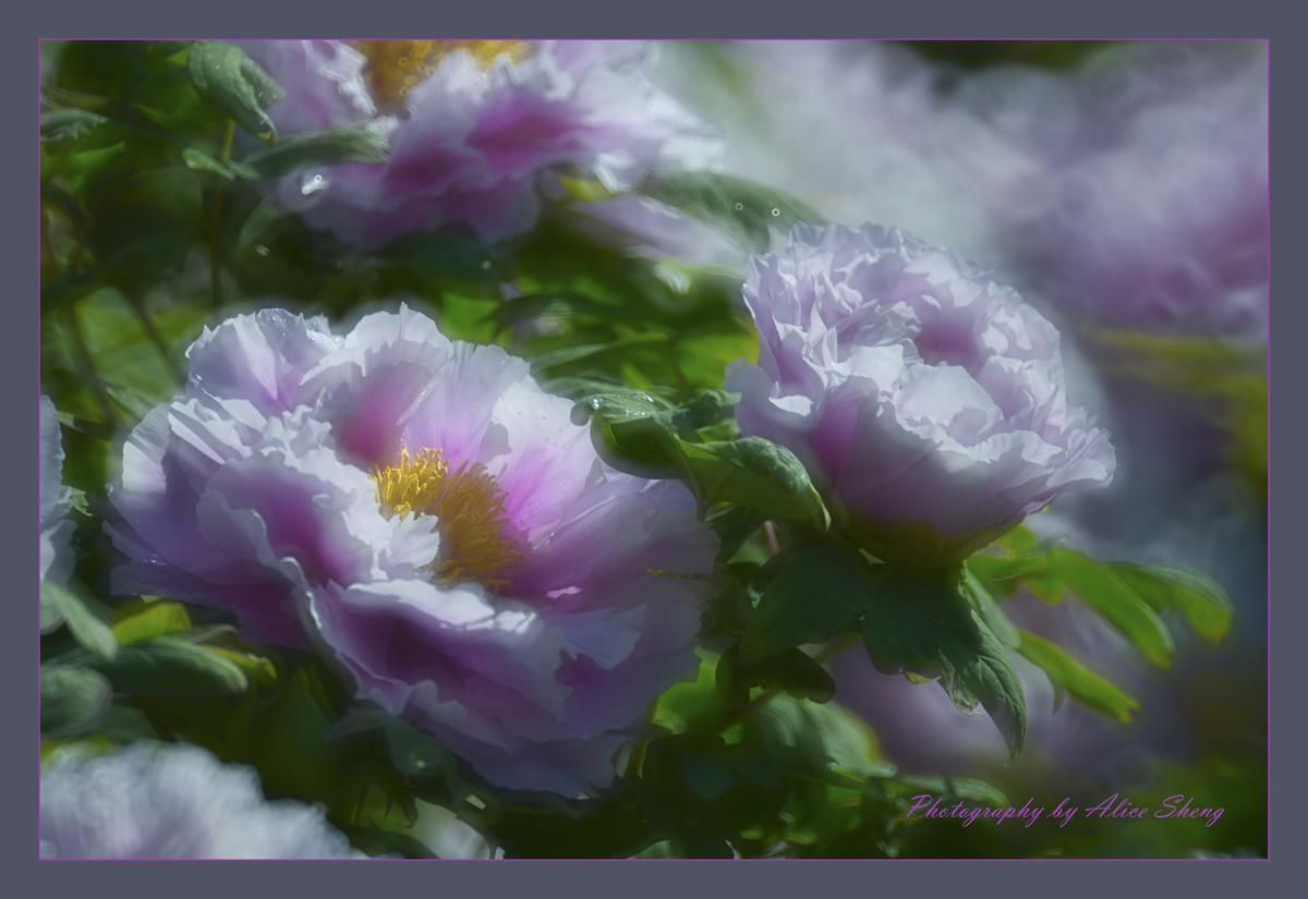花开福贵_图1-2