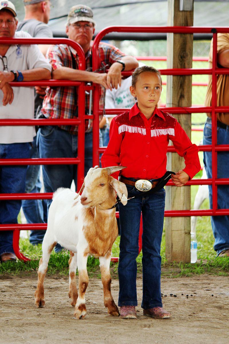 """小镇上的""""羊选美""""比赛_图1-1"""