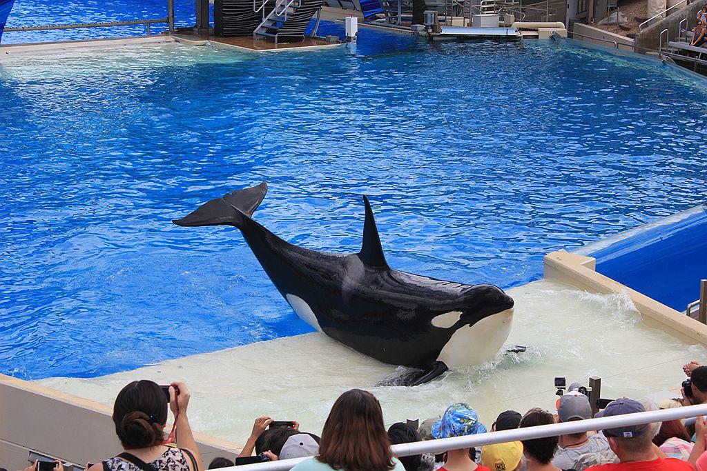 圣地亚哥海洋公园虎鲸表演_图1-1
