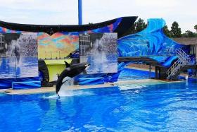 圣地亚哥海洋公园虎鲸表演