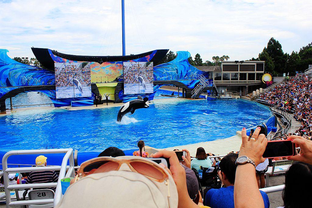 圣地亚哥海洋公园虎鲸表演_图1-3