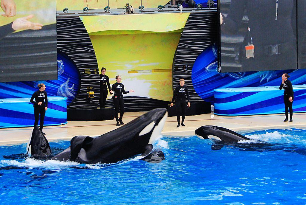 圣地亚哥海洋公园虎鲸表演_图1-4