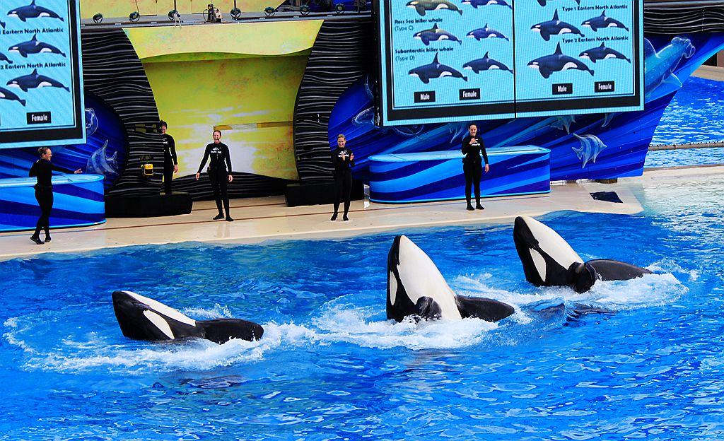 圣地亚哥海洋公园虎鲸表演_图1-5