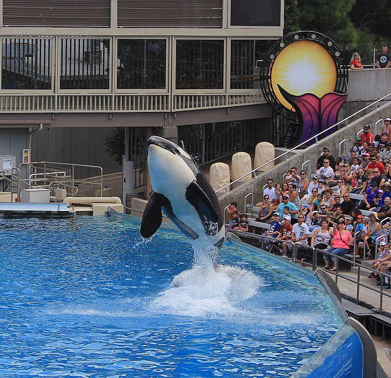 圣地亚哥海洋公园虎鲸表演_图1-6