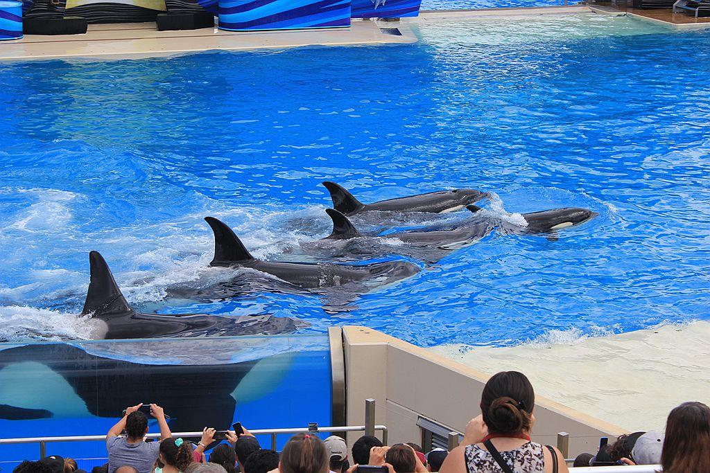 圣地亚哥海洋公园虎鲸表演_图1-7