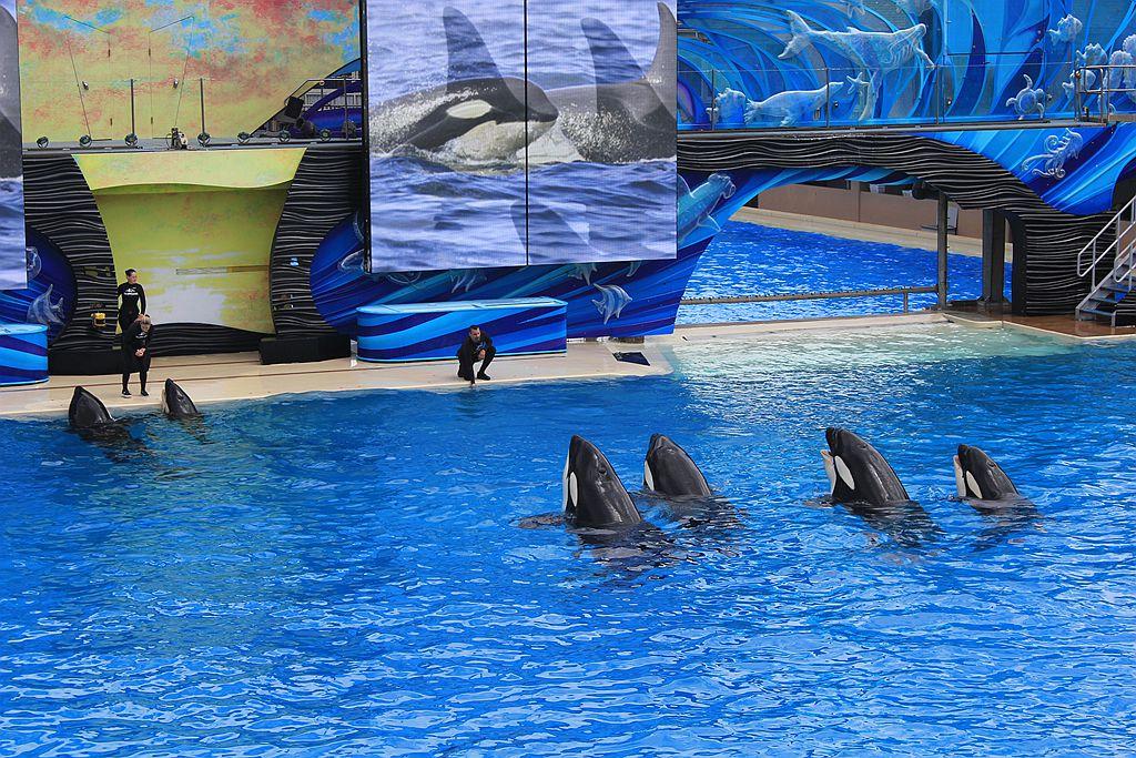 圣地亚哥海洋公园虎鲸表演_图1-8