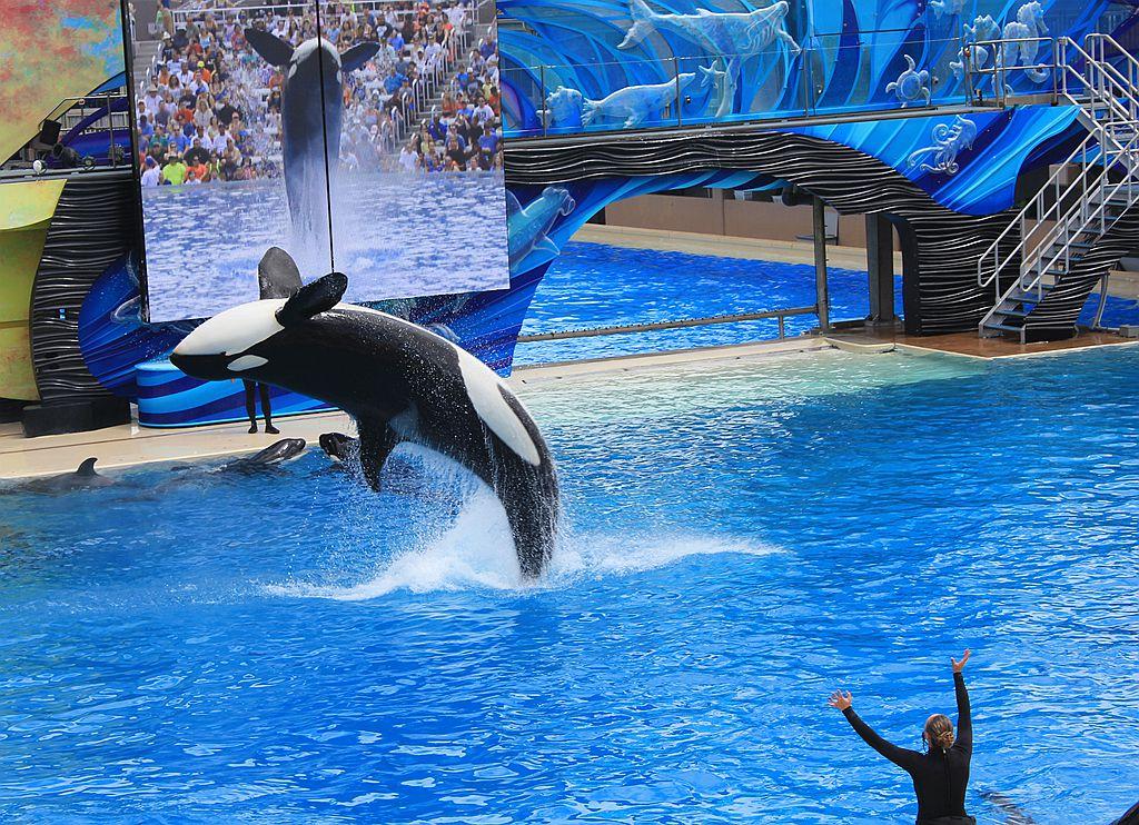 圣地亚哥海洋公园虎鲸表演_图1-9