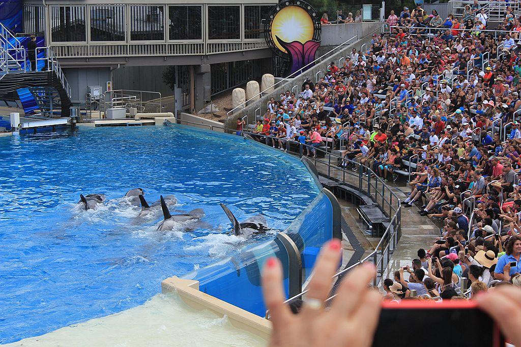 圣地亚哥海洋公园虎鲸表演_图1-13