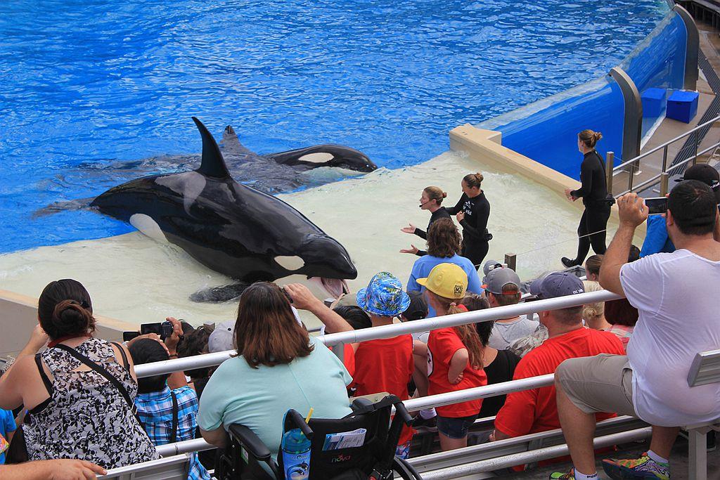 圣地亚哥海洋公园虎鲸表演_图1-10