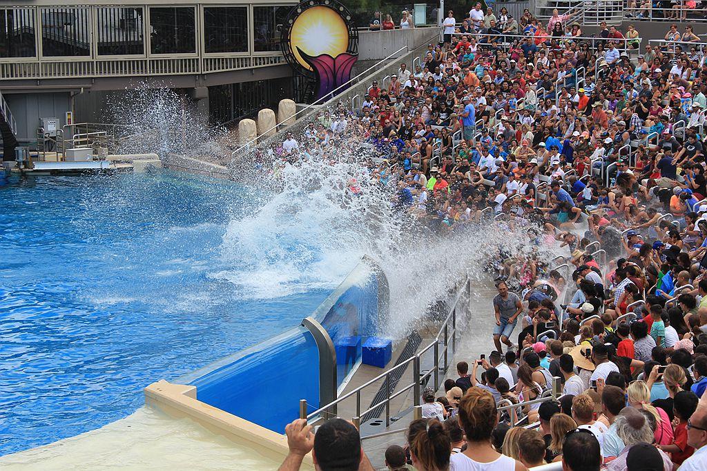 圣地亚哥海洋公园虎鲸表演_图1-14