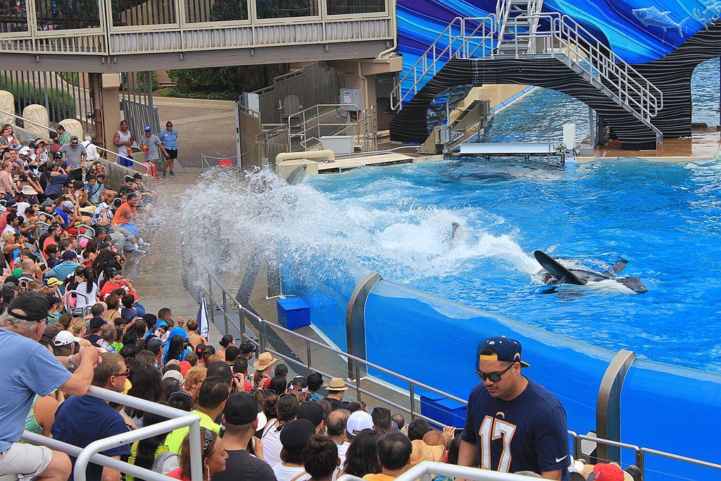 圣地亚哥海洋公园虎鲸表演_图1-15
