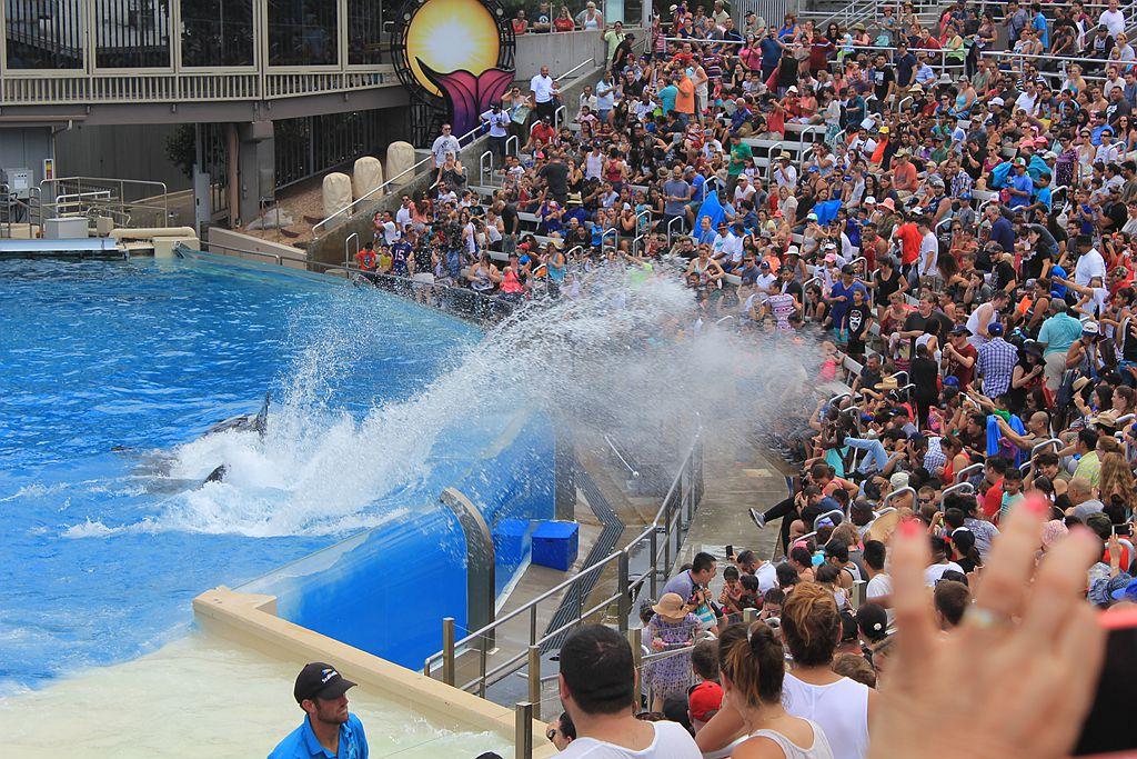 圣地亚哥海洋公园虎鲸表演_图1-16