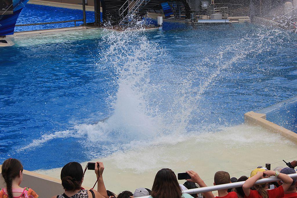 圣地亚哥海洋公园虎鲸表演_图1-17