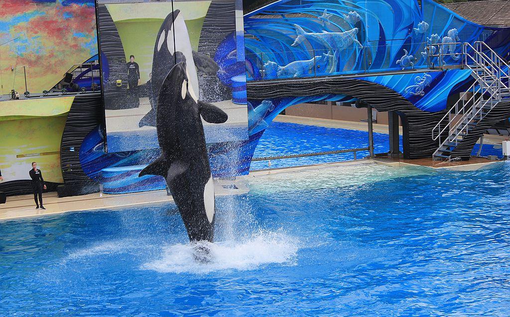 圣地亚哥海洋公园虎鲸表演_图1-11